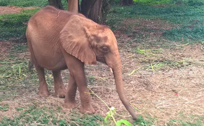 Uganda Wildlife ConservationCenter