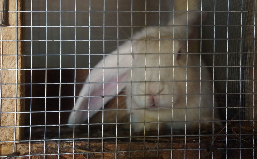 Rabbits…The New WhiteMeat!