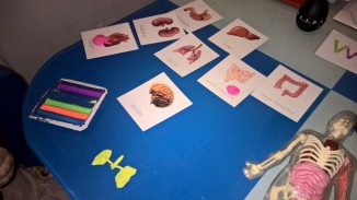 Body parts in playdough